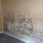 Mold Risks and Dry Ice Remediation