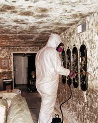 Why Is Black Mold Dangerous On The Job With Basement