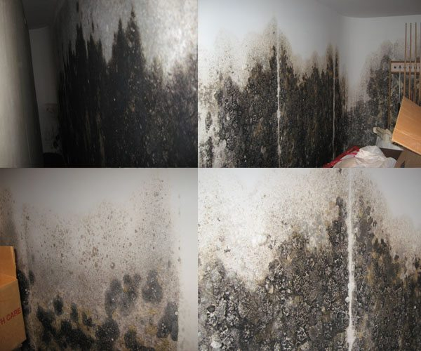 mold and mildew growth in home