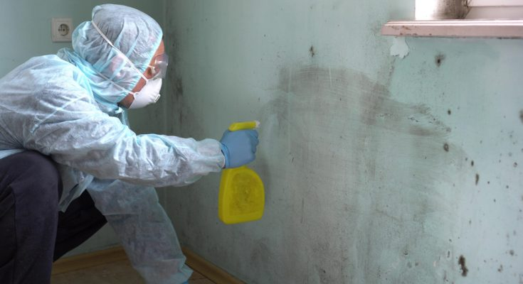 Mold Remediation Experts