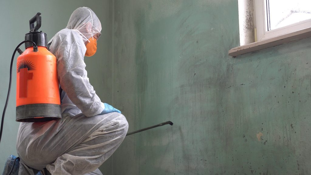 mold removal montgomery county pa