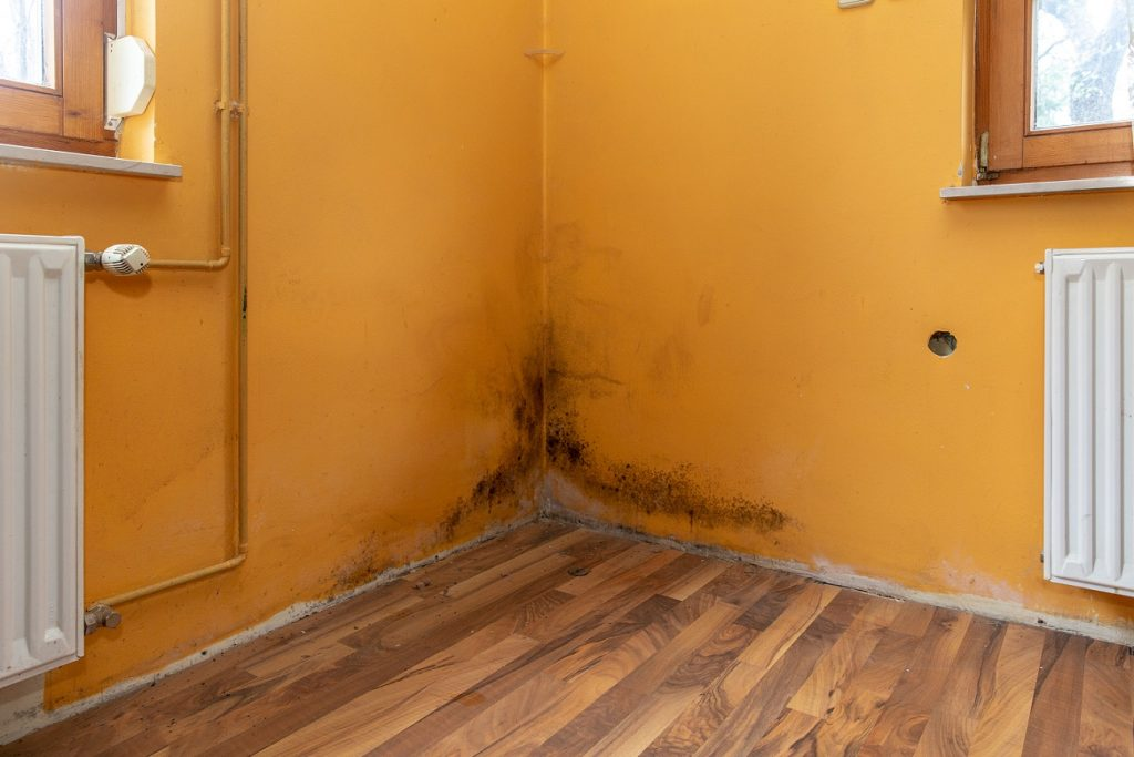 mold removal berks county
