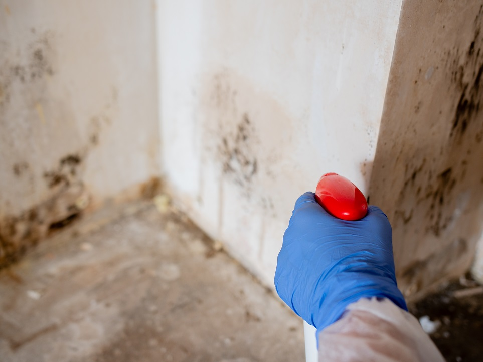 mold remediation chester county pa